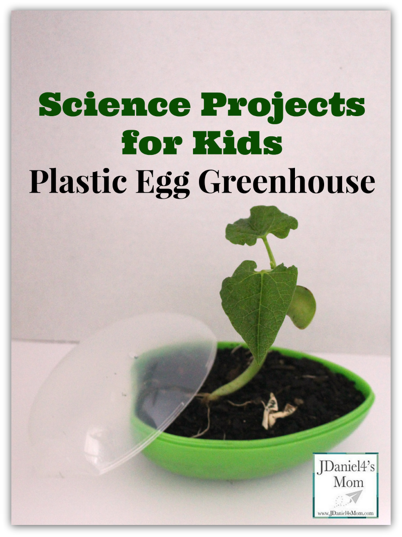 science-projects-for-kids-Plastic-Egg-Greenhouse-with-Bean